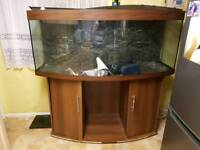 5ft fish tank and cupboard
