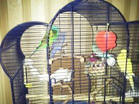 4 x budgies + cage 1 male and 3 female