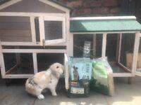Rabbit & duplex hutch