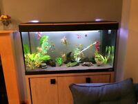 Fluval Roma 200 litre. WILL NOT SELL PARTS INDIVIDUALLY