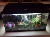 Fish tank 55ltr with everything pictured