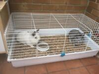 Rabbits and cage free to a good home