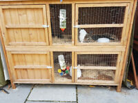 2 Male Rabbits & Double Decker Cage Complete
