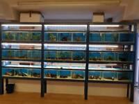 27 tanks on sump system fish house setup