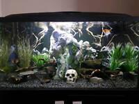 Tropical fish tank full set up!