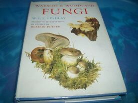 Illustrated by Beatrix Potter about Woodland Fungi