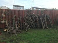Large of amount of logs for firewood £50