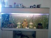 20 angel fish £15