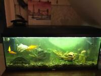 Aquarium 3ft fish tank with 13 fishes & More