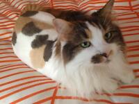 TONTE et TOILETTAGE à domicile / HouseCall grooming for cats