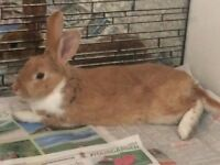 RABBIT FOUND IN THREESCORE 16TH JUNE