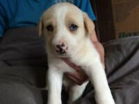 Beautiful puppies ready for new loving homes