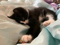 Beautiful fluffy kitten for sale.
