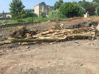 Trees/firewood