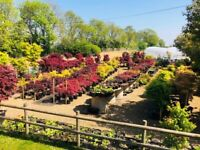 Hundreds of acers for sale