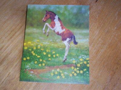 13  Pinto Paint  Foal Horse  Blank Note Cards by Chris Cummings  NIB