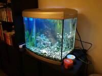 Complete tank aquarium 60 l with fish