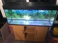 Juwel Rio 240 litre Aquarium