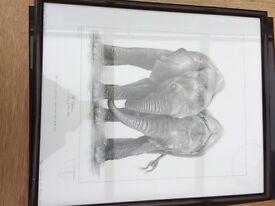 Orphans two baby elephants print