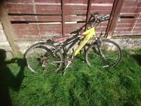 various bikes different sizes all need a bit of tlc