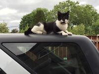 Timid black & white female cat with pink collar & tag missing in Central Avenue area