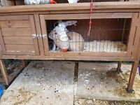 Free rabbit with hutch