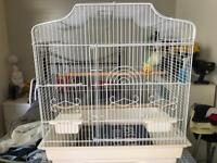 Baby Budgie and cage
