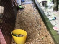 Approx 4-5 tons of golden gravel, 20 mm and 10 mm mixed £50
