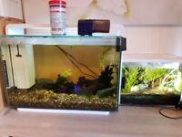 60L and 20L Fish tanks