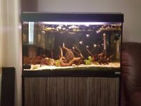 Fish Tank / Aquarium Fluval Roma 125 with stand and external filter Fluval 206