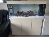 Marine aquarium - Juwel Rio 240L tank with cabinet, accessories, coral