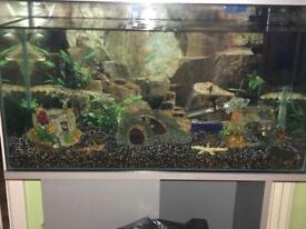 Fish tank 110 litre