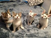 4 KITTENS ARE LOOKING FOR NEW HOME