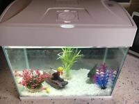 20l fish tank