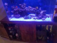 Marine Aquarium - Full Setup BARGAIN