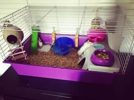 2x Small rodent cages (rats, guinea pigs, chinchilla) £10 each
