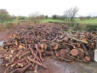 Seasoned logs, firewood, cordwood, timber