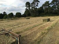 This years hay