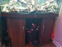 juwel bow front fishtank