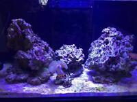 Marine rock aquarium