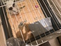 Free three month bunny it came whit the cage