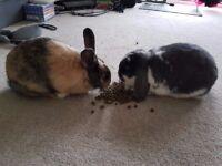 Cute female rabbits