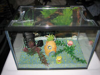 FISH TANK WITH ACCESSORIES OR SWAP