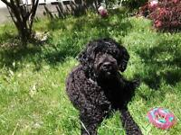In Home Dog Boarding  with Lots of Pampering & Experience