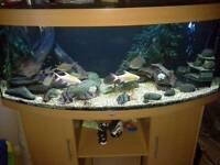 OFFER BUNDLE DEAL FISH