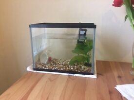 15 Litre Fish Tank + Filter