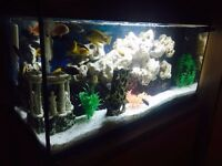 Juwel Rekord 800 fish tank aquarium plus extras and live fish for sale