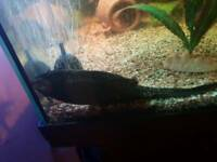 juwel rio 115 litre fish tank