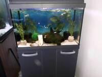 Mature Tropical Tank & Fish