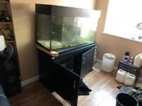 4ft Marine fish tank. Sps Lps system